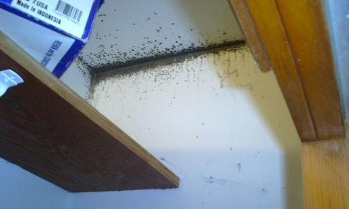 Mold Remediation Services/Mold Testing